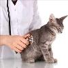 Ветеринарные клиники в Десногорске
